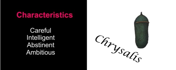 Characteristics of the chrysalis phase for the Developmental Process.